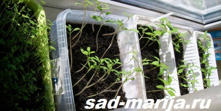 16 марта — начинаю вести садовый дневник онлайн